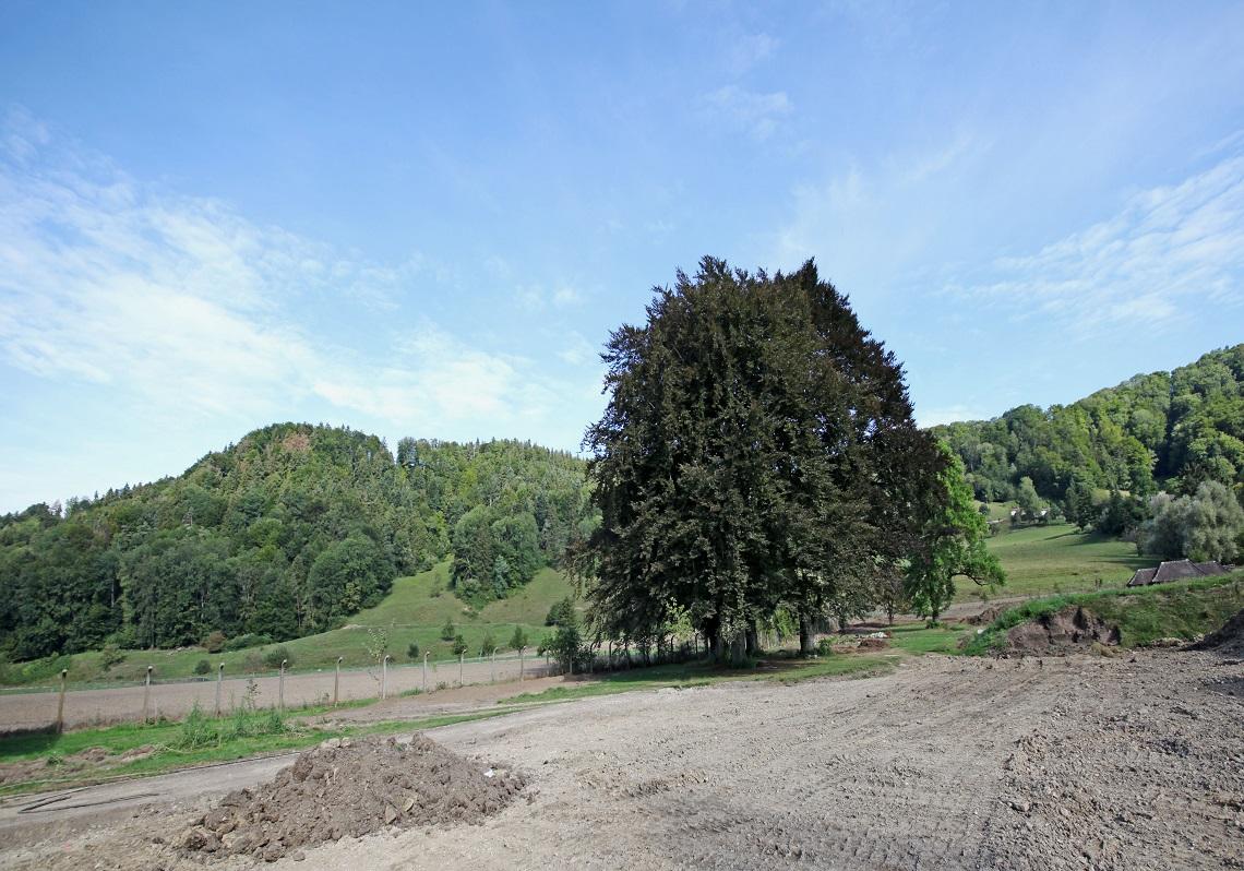 3_Obersee_Immobilien_Weitblick